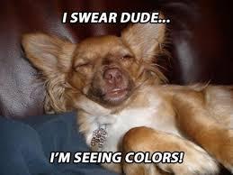Stoned Dog Meme - funny stoner dog meme google 3 hahahaha pinterest