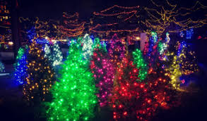 christmas lights at the zoo indianapolis uncategorized indianapolis images