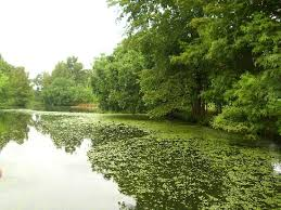 Louisiana scenery images Scenery from the boat picture of louisiana purchase gardens jpg