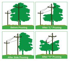 tree pruning guidelines nebraska power district