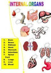 english teaching worksheets internal organs life skills