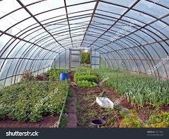 Inside Greenhouse Ideas 100 Inside Greenhouse Ideas Indoor Plants Inhabitat Green