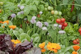 best small vegetable gardens ideas on pinterest raised garden