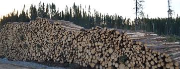 wood business canadian forest industries canadian wood products