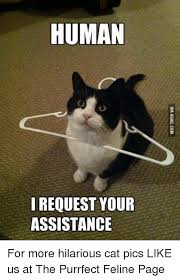 Purrrfect Meme - human i request your assistance for more hilarious cat pics like us