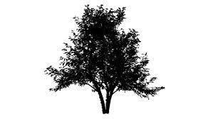 animated tree stock footage 471055