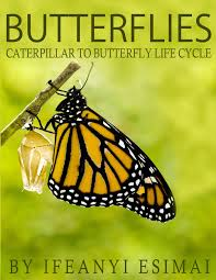 buy butterflies butterfly book for kids fun facts about