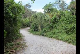 Florida nature activities images Sanibel island florida with kids 25 best activities for a family jpg
