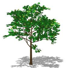 linden lime tree 3d model formfonts 3d models textures