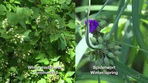 native texas plants for shade shade garden plants trisha shirey u0026 barbara wise central texas