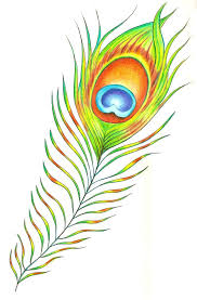 accessories endearing image of beautiful color peacock feather as