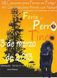 Asturias para niños: A dónde vamos hoy en Feria del perro