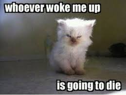 Morning People Meme - 13 baby animals being grumpy old men funny cat quotes cat and animal