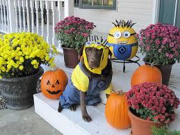 Family Dog Halloween Costumes Minion