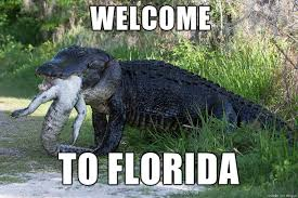 Alligator Memes - welcome to florida meme on imgur