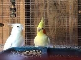 heat l for bird aviary kl aviary home facebook