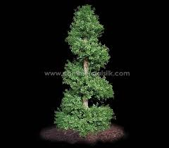 outdoor artificial boxwood spiral topiary silk boxwood topiary for