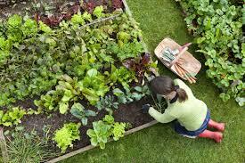 gardening basics easy gardening gardening made easy birds