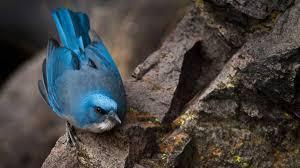 different types of jays u2014 colorful birds audubon