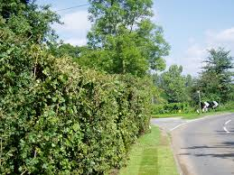 native hedgerow plants instant hedge natural hedging garden projects recreate
