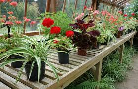 plante d駱olluante chambre 15 plantes dépolluantes qui purifient l air intérieur de votre