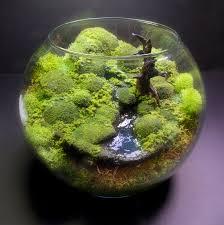 bubble moss bonsai fantasy terrarium u003c3 jh cool gifts