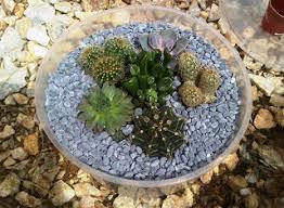 life is like a rainbow diy cactus terrarium