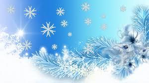 winter fir christmas shine ice pine snow spruce flowers winter