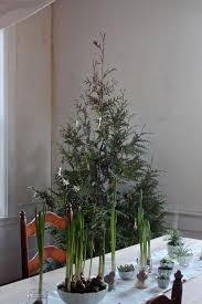 diy plant your christmas tree in the garden gardenista