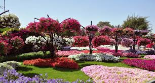 most photogenic gardens flower hd images morewallpapers com