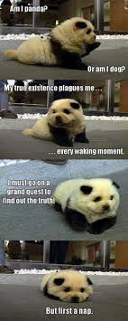 Funny Panda Memes - top 40 funny animal picture quotes panda dog and animal