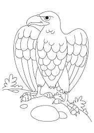 eagle coloring pages for kids coloringstar