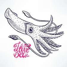 beautiful hand drawn squid stock vector image of pink 67189199