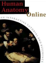 Abdominal Anatomy Quiz Human Anatomy Quiz