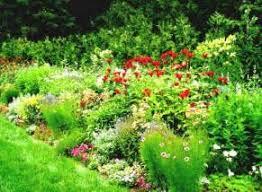 perennial garden ideas zone 6 interior design