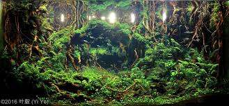 Aquascape Moss 2016 Aga Aquascaping Contest Results European Aquascape Channel