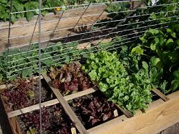 homestead revival benefits and construction of raised beds for