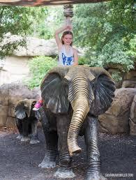 summer day at the dallas zoo u2014 savannah smiled