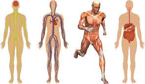health science i