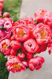 Rose Flower Design Pink Peonies Fleur Pinterest Pink Roses Peony And Rose