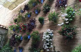 vertical gardens the courtyards houses of cordoba in spain