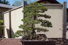 montreal botanical garden and bonsai trees living outside the box