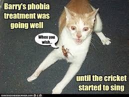 Jiminy Cricket Meme - i can has cheezburger jiminy cricket funny animals online
