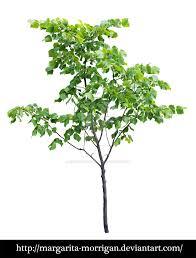 small tree by margarita morrigan on deviantart