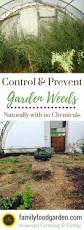 How To Do Landscaping by What To Do When Weeds Have Taken Over Your Garden