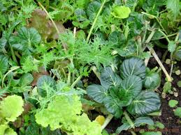 12 vegetables you can grow in winter bc farms u0026 food