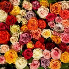 bulk roses bulk roses www rosaholics