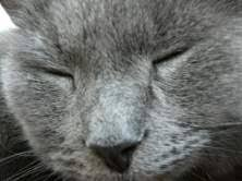 How Long Do Fleas Live In Carpet Flea Infestation Easy Steps For Permanent Results
