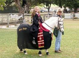Horse Rider Halloween Costume 28 Horse Costumes Images Horses Costumes