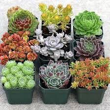 Best Plants For Rock Gardens Rock Garden Plants Best Plants For Rock Garden Zone 4 Alexstand Club